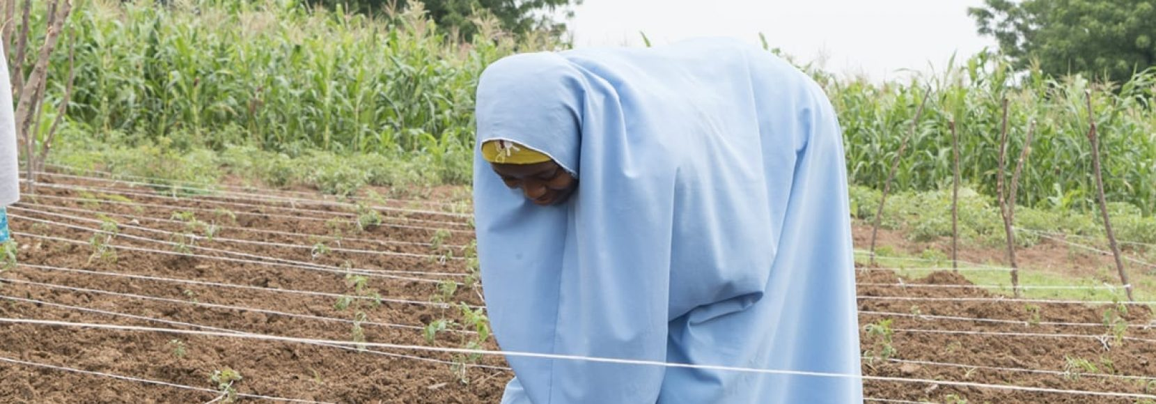Nigerian woman checking on crops