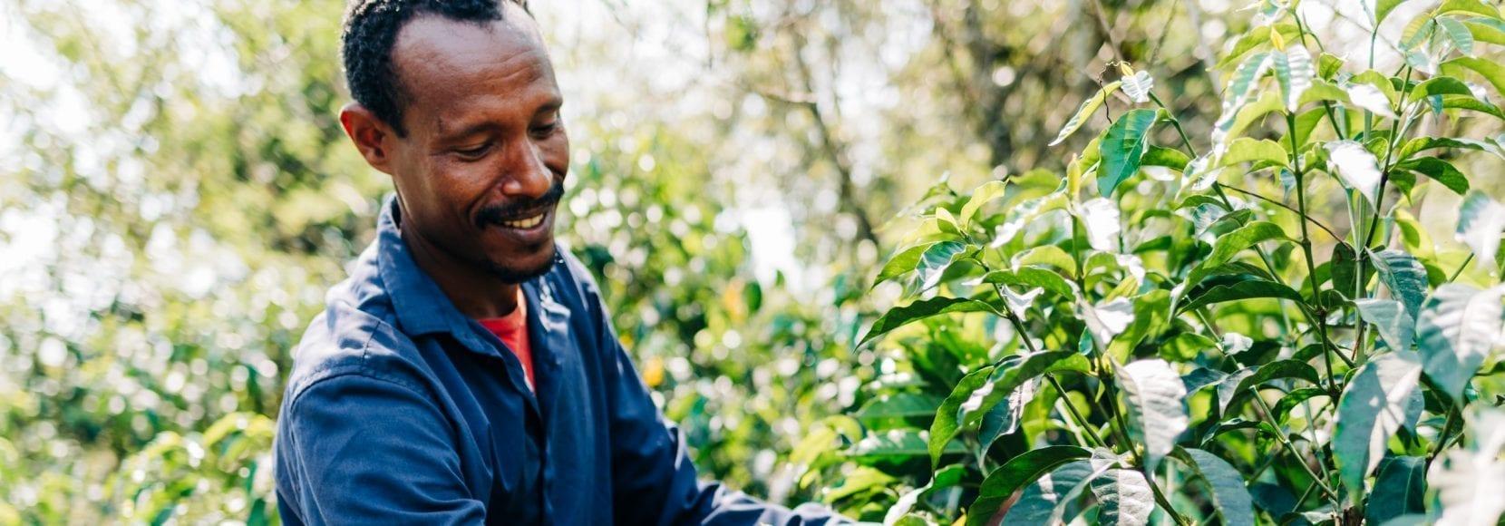 Adugna Feye is a coffee farmer in western Ethiopia