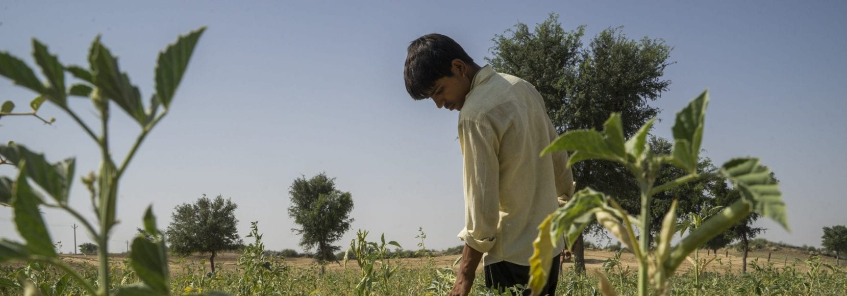 Young Indian boy in farm