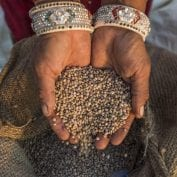Woman holding grain