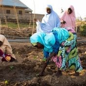 Women tomato farmers in northwest Nigeria