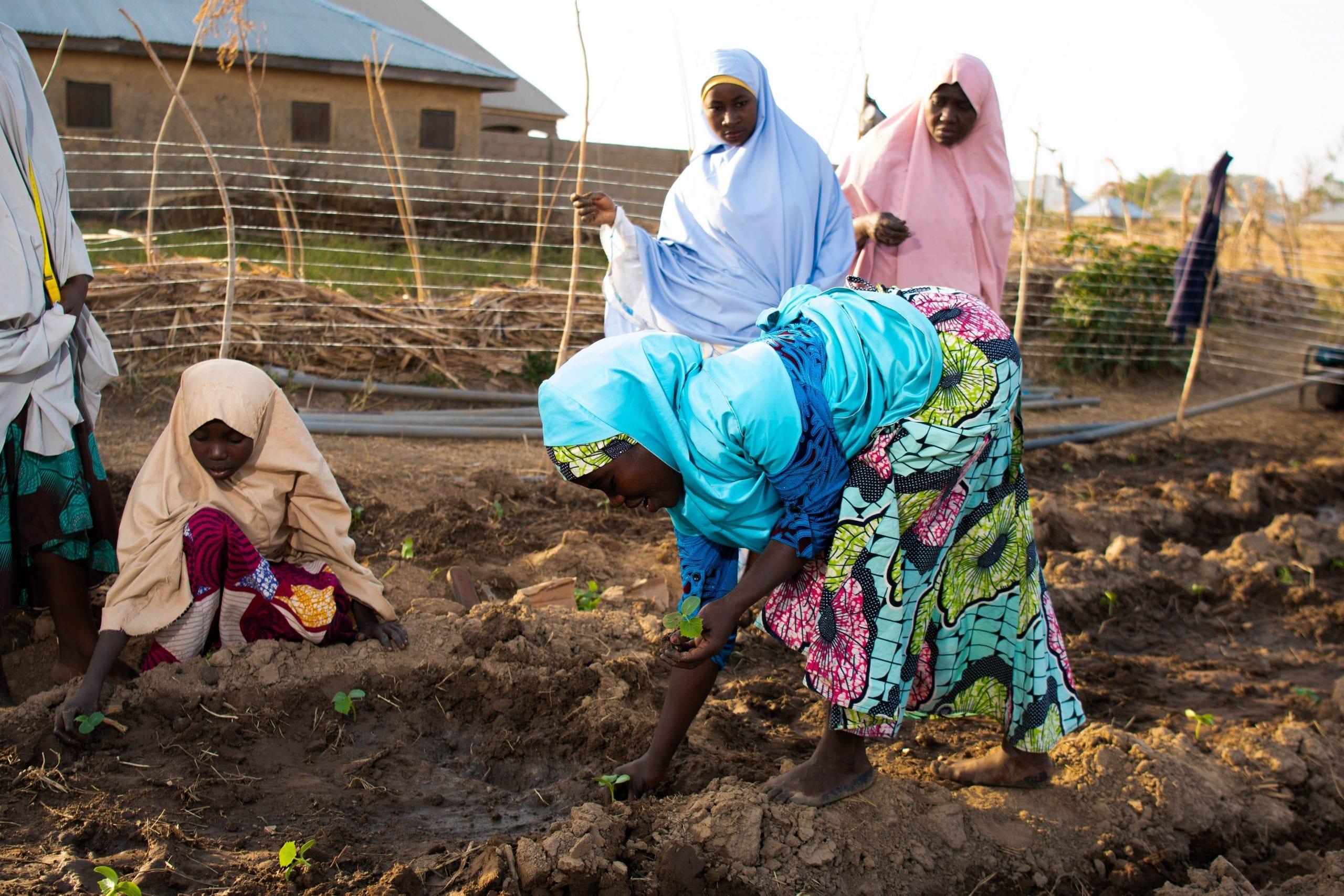 Women tomato farmers in northwest Nigeria