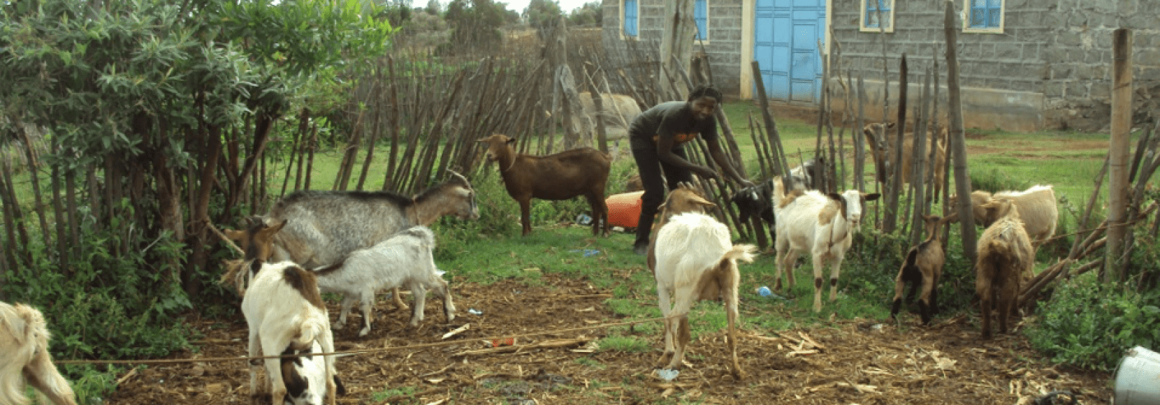 Mary tends to her goats on her property in Kenya