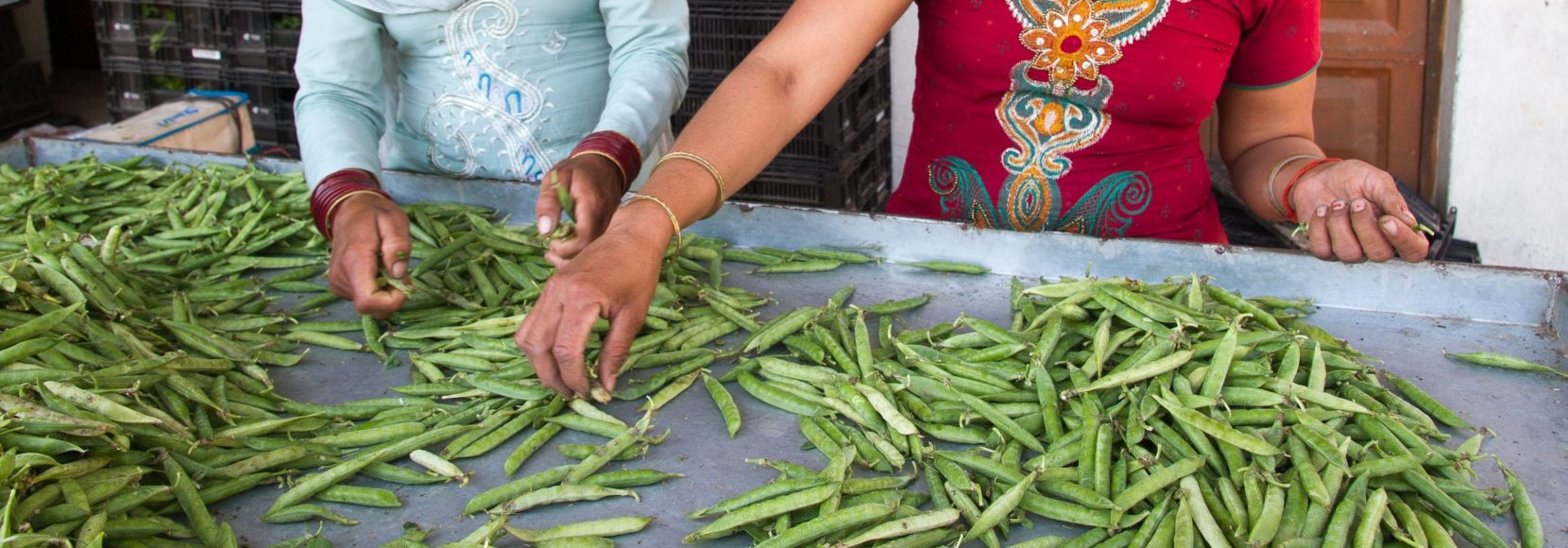 Women sort peas at a TechnoServe vegetable collection center in India