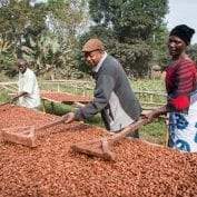Three people processing coffee in a wet mill in Africa