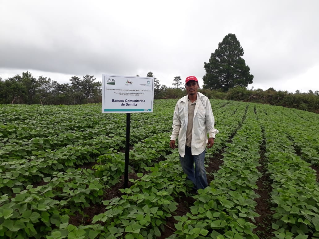 A bean farmer standing proudly in a field in Honduras