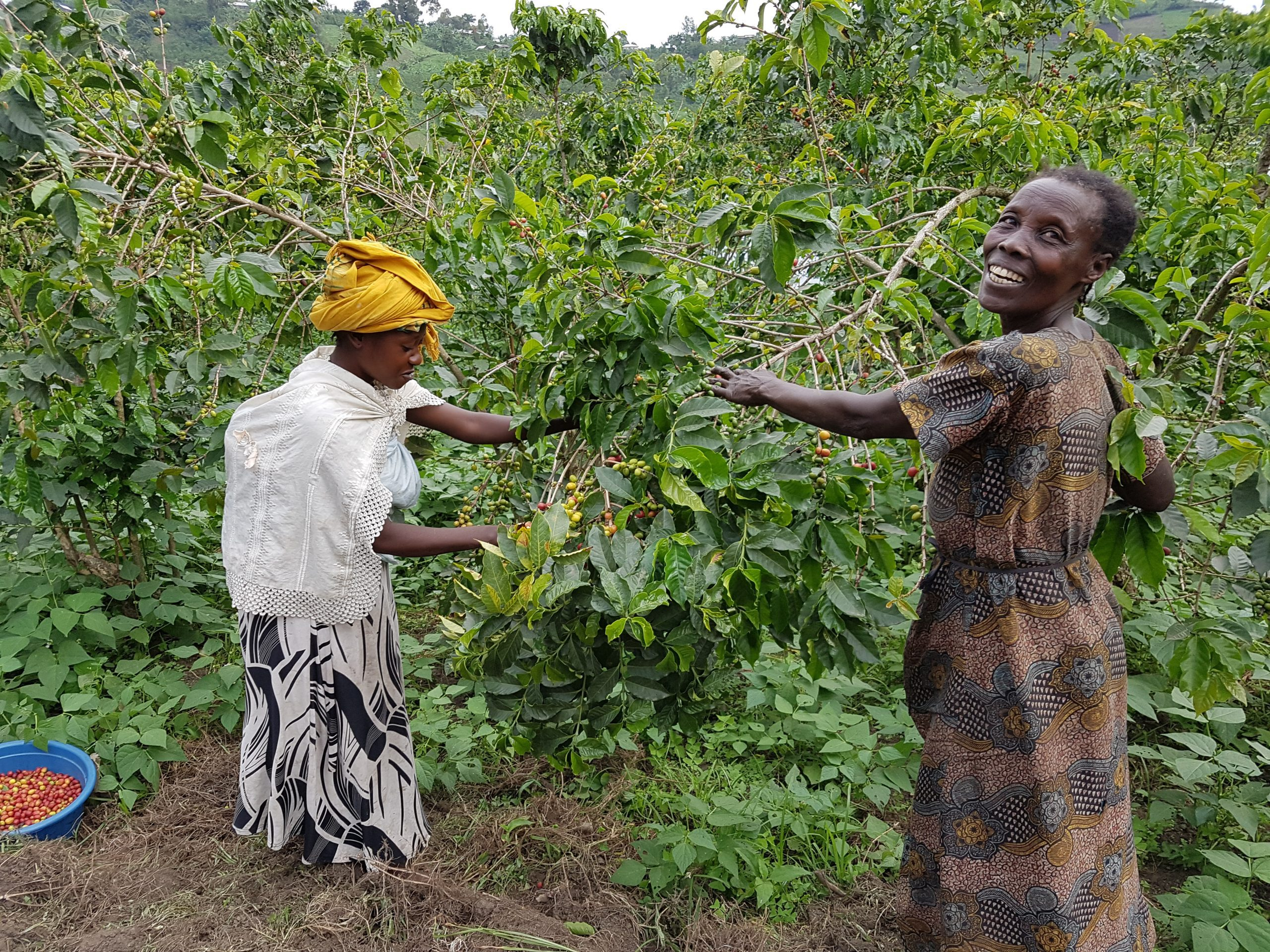 A mother and daughter harvesting the first cherries of the new harvest