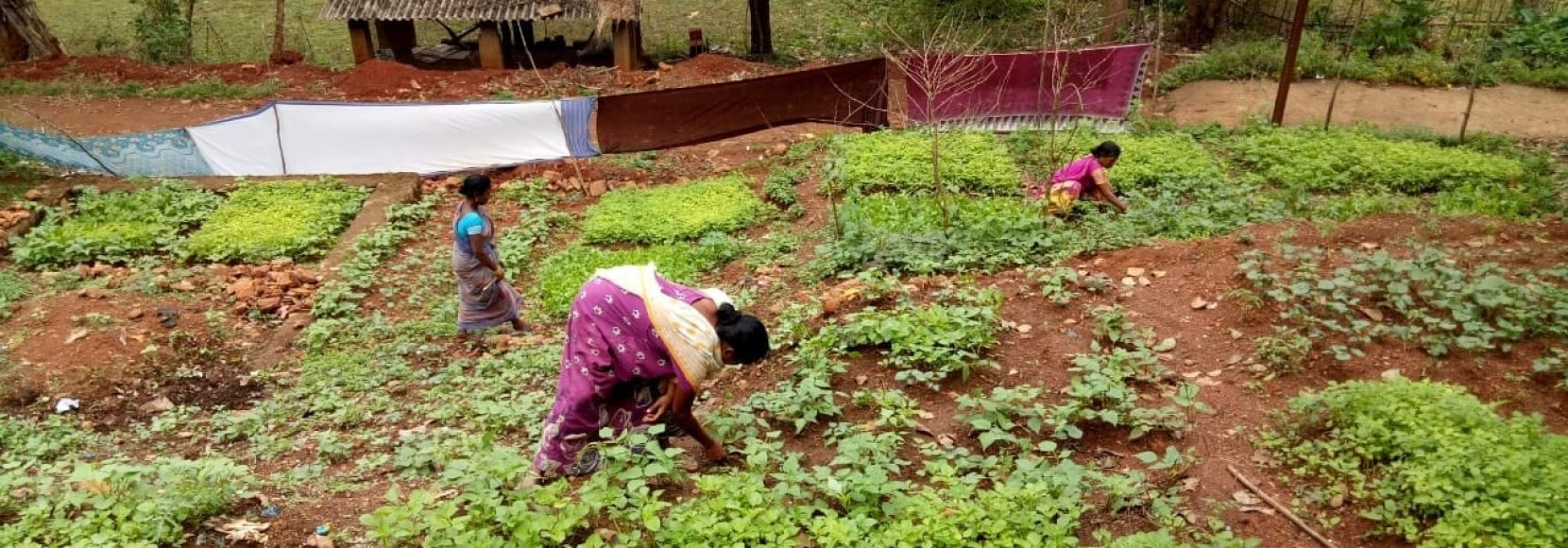 Women taking care of plants in an organic kitchen garden in India