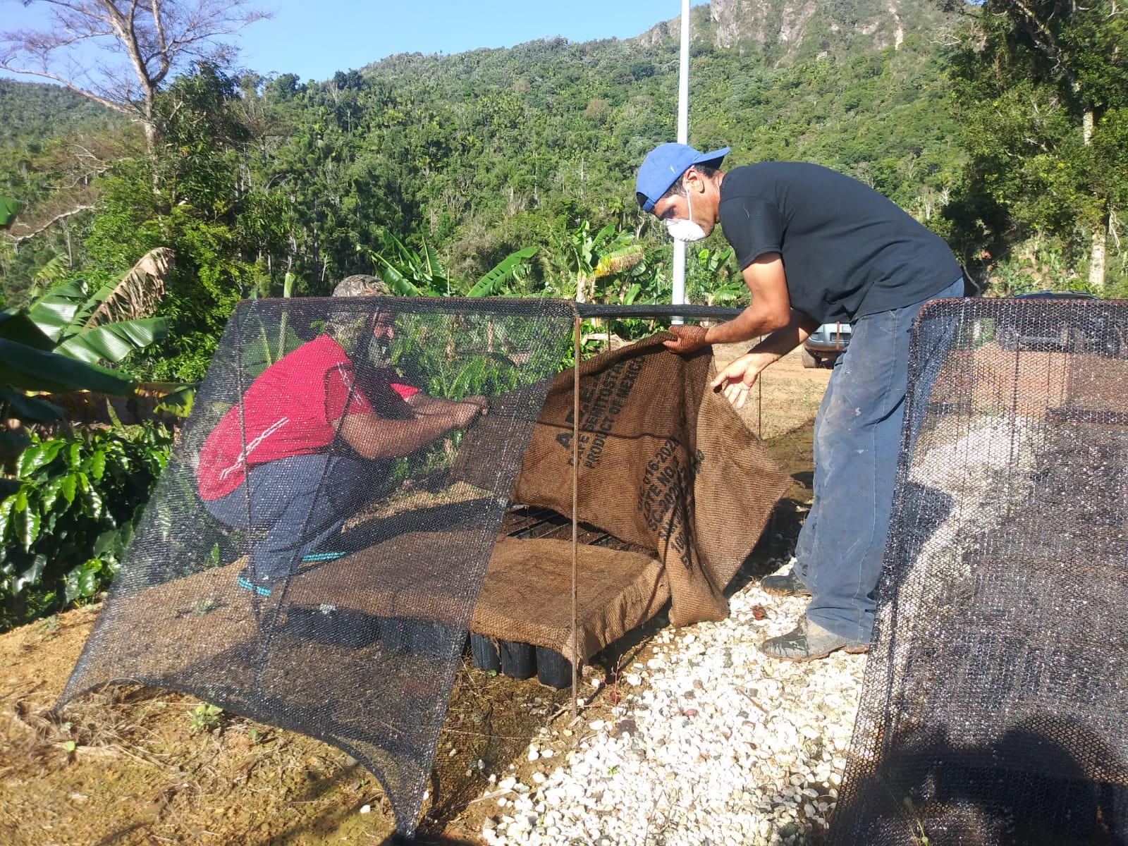 Coffee farmers in Puerto Rico work on their land