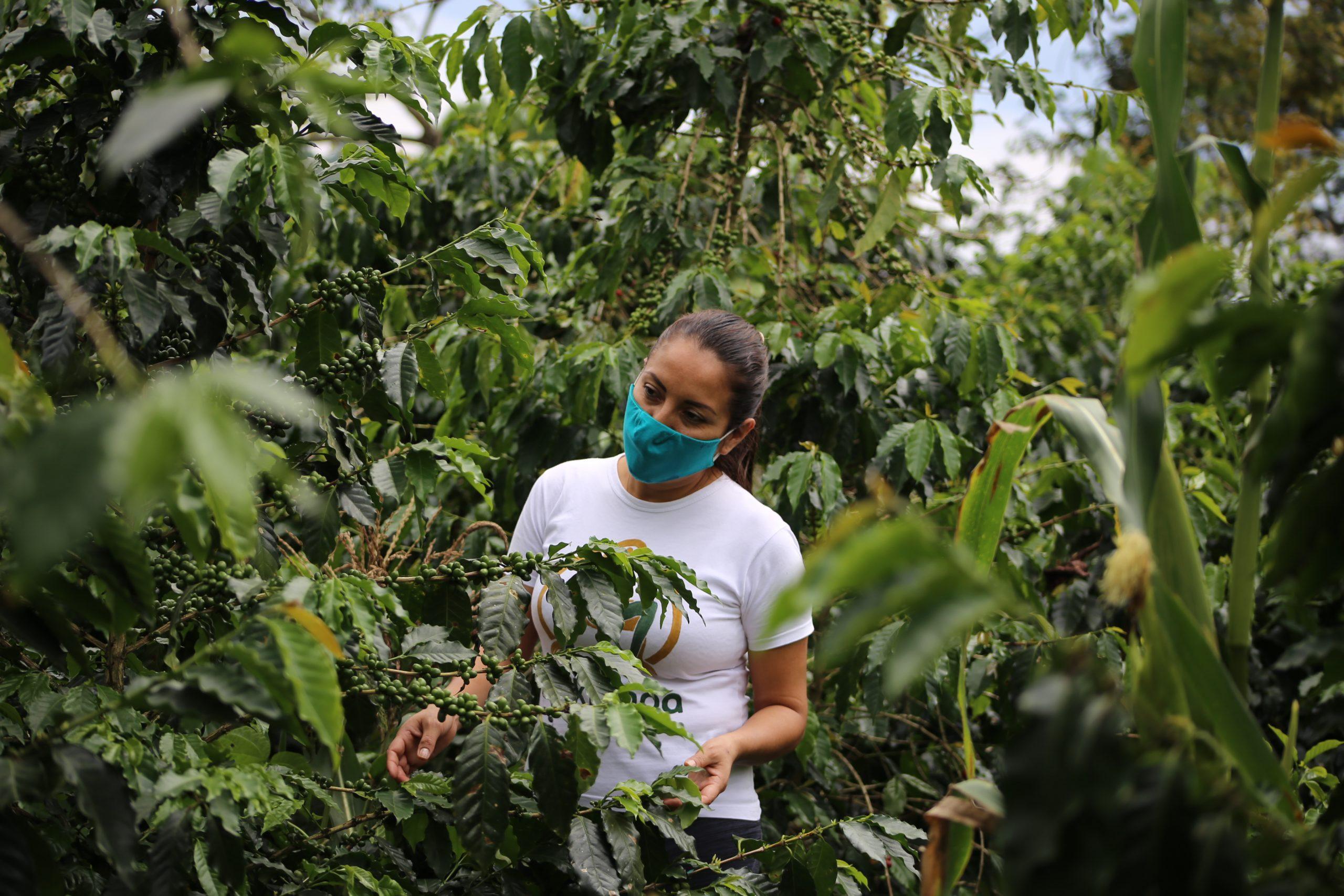 Juliana stands in a coffee field in Peru