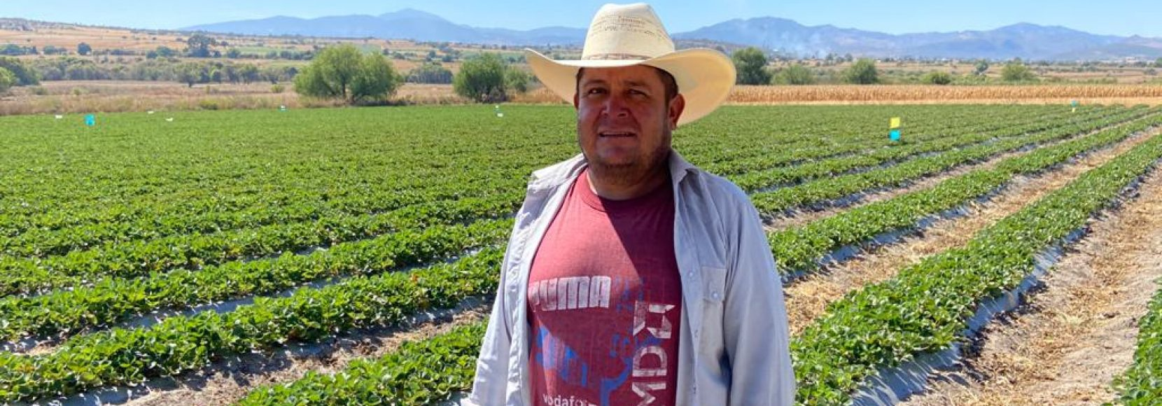 Ramiro Silva is a strawberry farmer in central Mexico