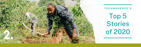 A coffee farmer in Ethiopia tends to his field