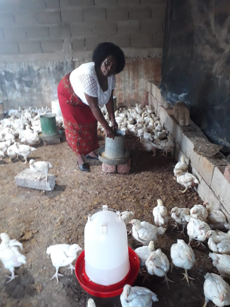 Helena Namura stands in a chicken coop on her property in Pemba, a coastal city and Mozambique.