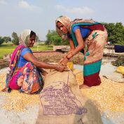 Maize procurement in Uttar Pradesh, India