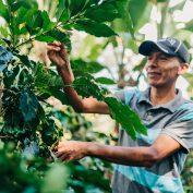 Learn 5 takeaways from the U.N. Food Security Report 2021
