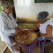 A family-run small business in Brazil produces fresh garlic.