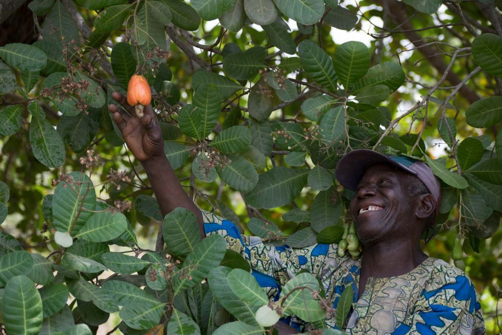 """Turning cashew apples from Benin into the perfect snack is just one example of how food processing is so much more than the """"junk food"""" the phrase """"processed food"""" often brings to mind."""