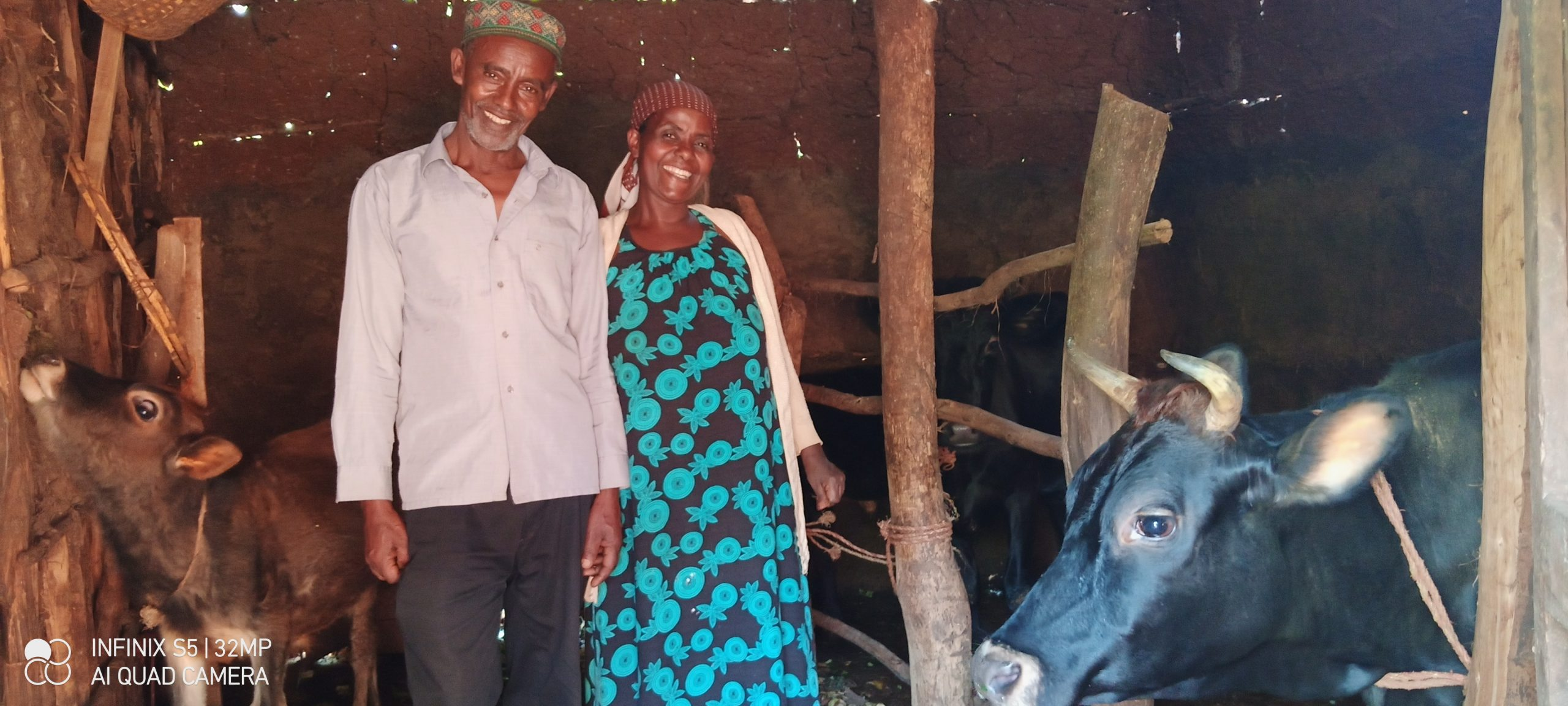 Two coffee farmers pose with the cows they purchased with their coffee income.