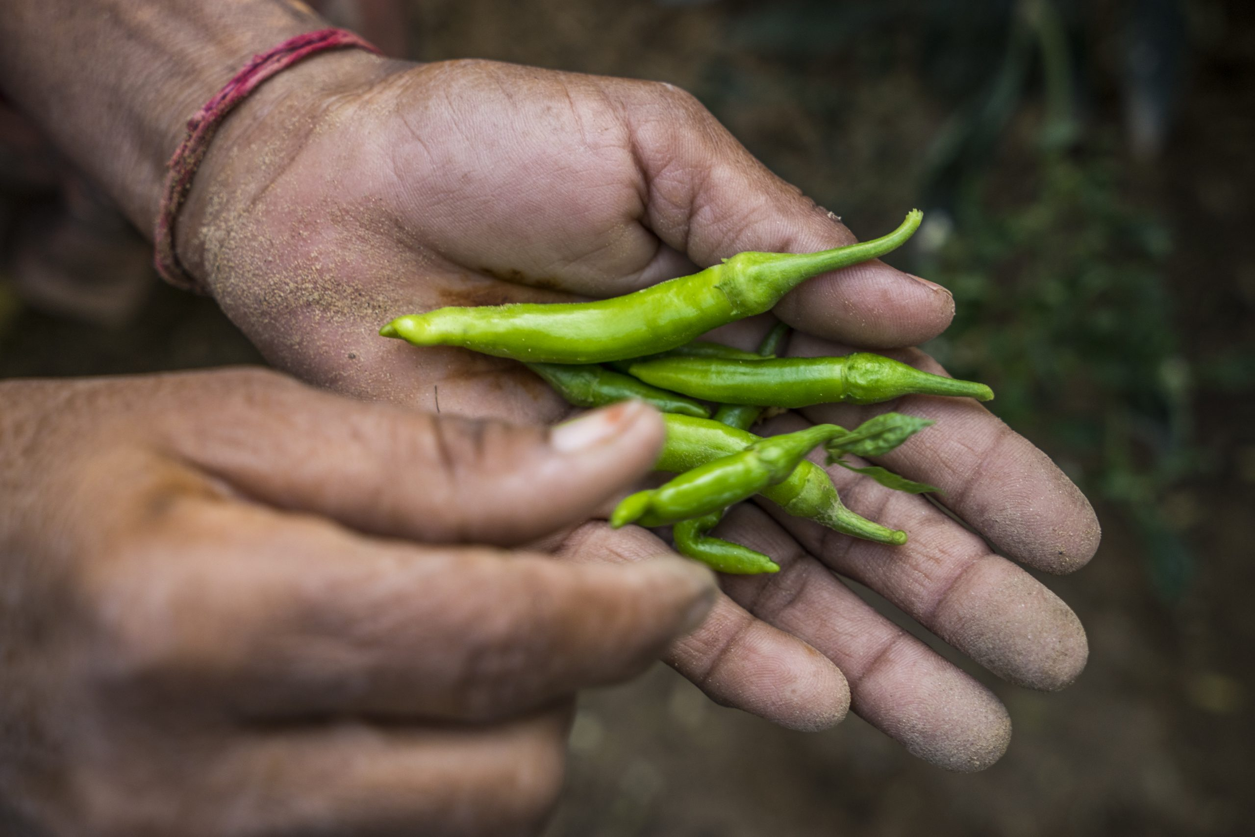 Small-scale farmers in India learn how to grow organic kitchen gardens. Image of a hand outstretched with vegetables.
