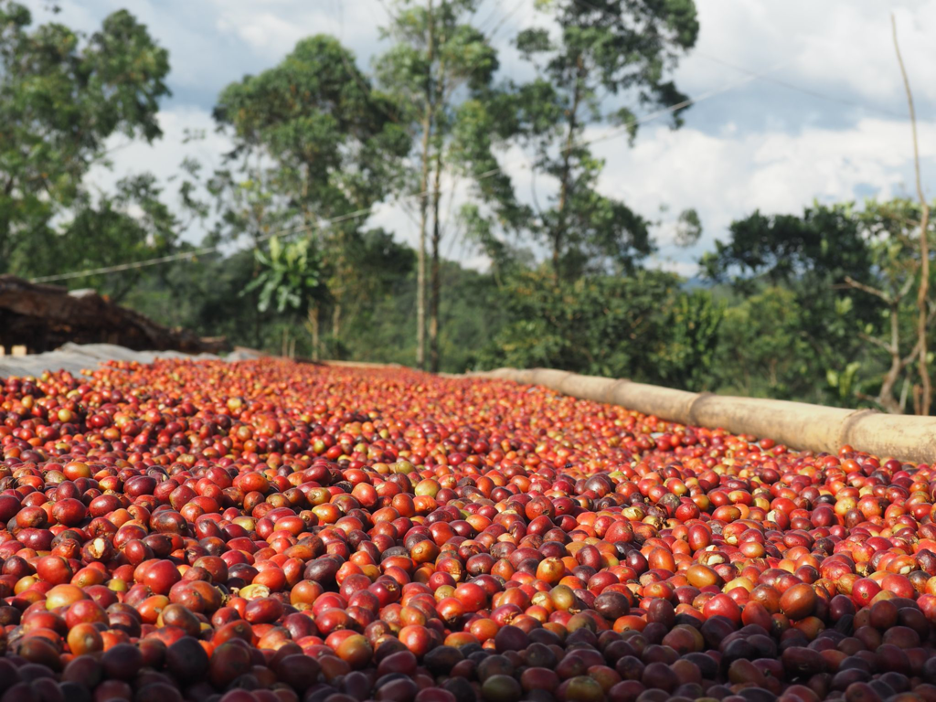 Coffee helps hardworking people provide a better future for their families