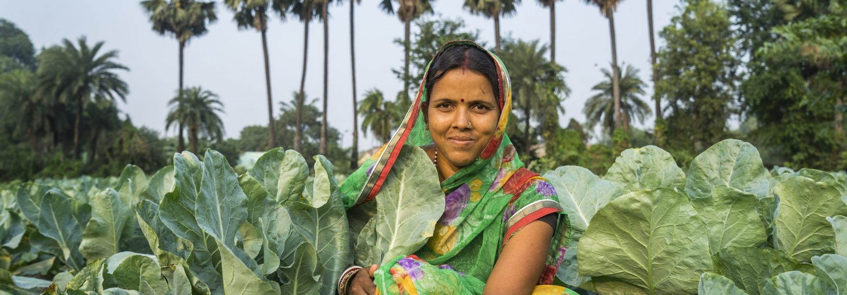 Take TechnoServe's food security quiz. Image of a vegetable farmer in India kneeling near her crops.