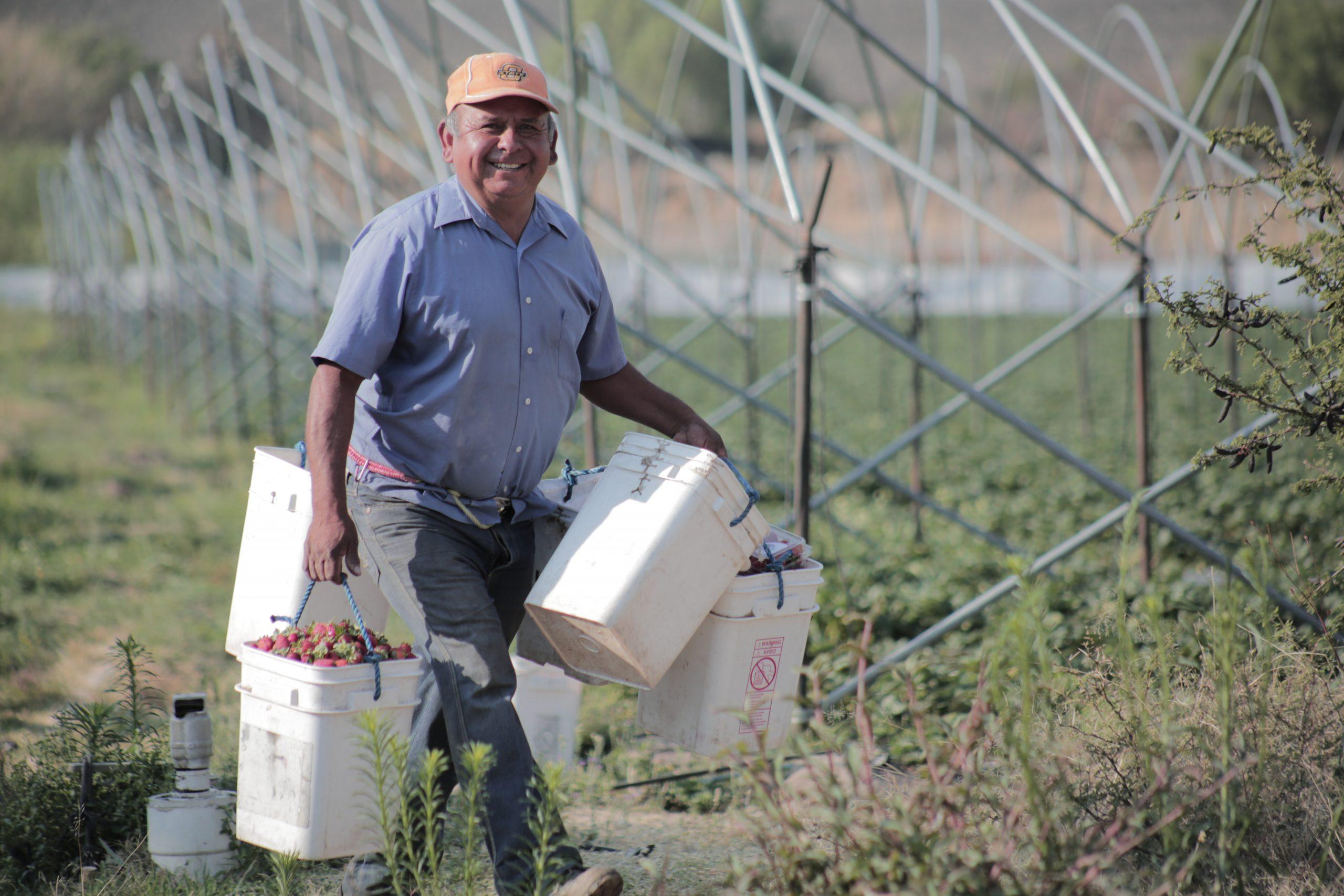 Farmer learns better farming techniques improve income