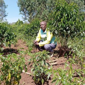 Amanuel examines some of the young coffee trees on his farm