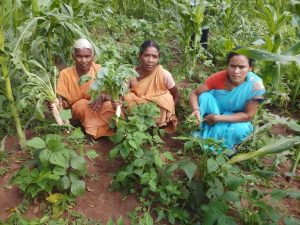 Women in Andhra Pradesh, India, tend to their kitchen gardens prior to the COVID-19 pandemic