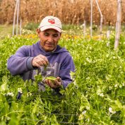 Climate change is impacting farmers in central america. Learn how in a new blog.