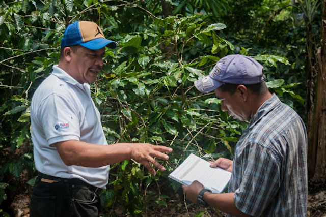 Coffee farmers in Guatemala learn best practices