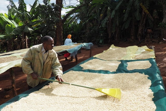 A coffee farmer in Zimbabwe's Honde Valley
