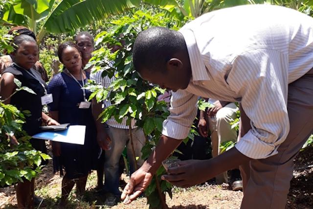 Dominic Ogut is TechnoServe's Africa regional agronomy advisor