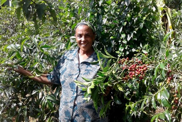 Alemitu Dimato is a coffee farmer in Ethiopia.