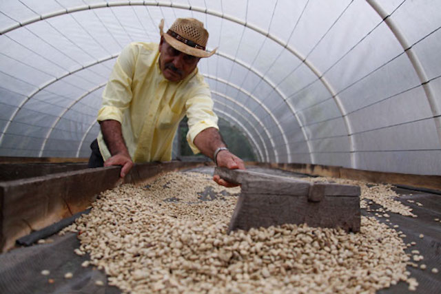 A smallholder coffee farmer in Honduras