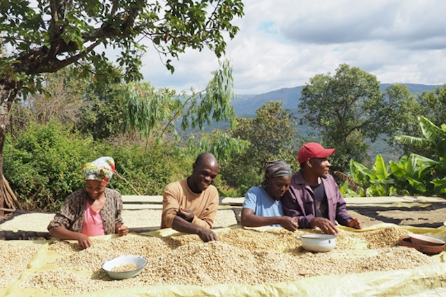 Coffee farmers in Zimbabwe's Eastern Highlands