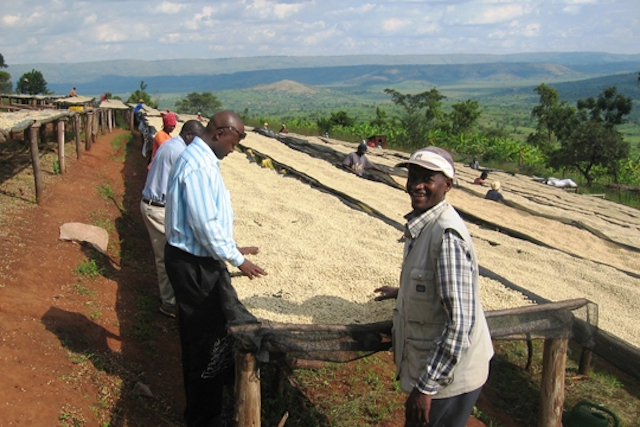 Coffee dries on large drying beds in Rwanda