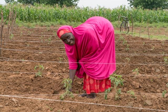A tomato farmer in Nigeria