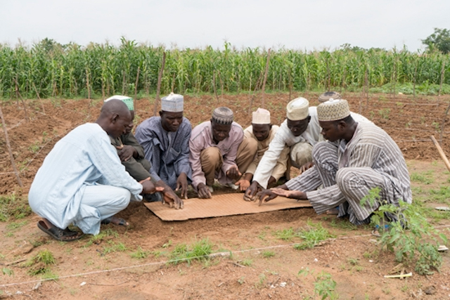 Smallholder farmers sow tomato seeds at nursery using a sowing board