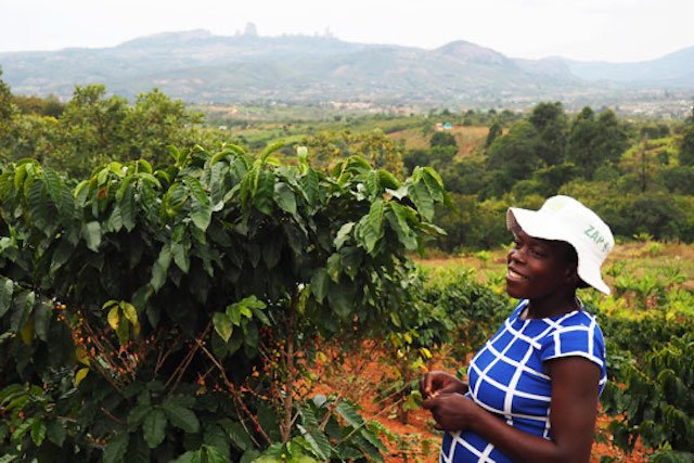 Tanyaradzwa Makina, a coffee farmer in Zimbabwe's eastern Manicaland province.