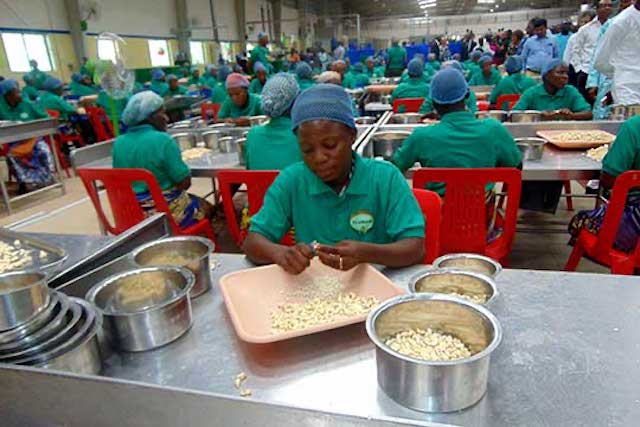 Benin cashew factory Fludor