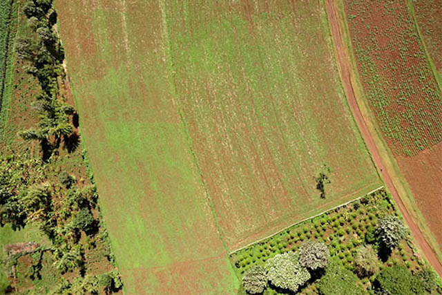 Can Drones Change Africa's Agricultural Future