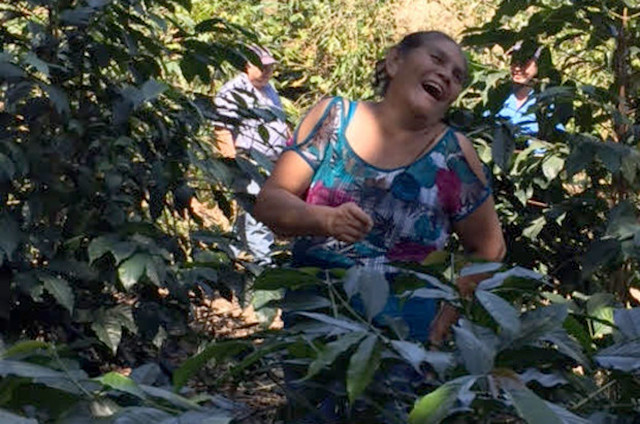 Guatemalan coffee agriculture