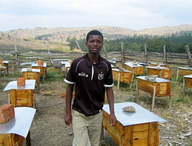 Young worker performs routine check of his families beehives in Swaziland