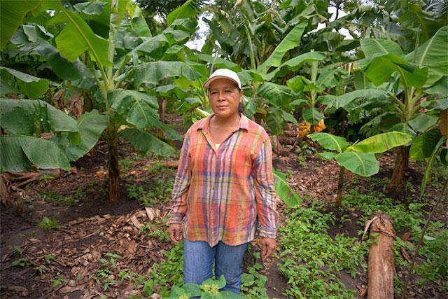 Women farmer tending to her cocoa trees in Nicaragua