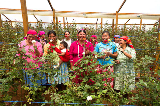 12 women cultivating flowers in Honduras