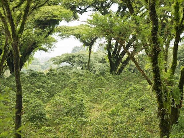 Ethiopian forest near where Tadelech Ewdanke lives
