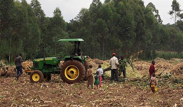 Mechanized Service Provider (MSP) shredding maize for fodder in Kenya