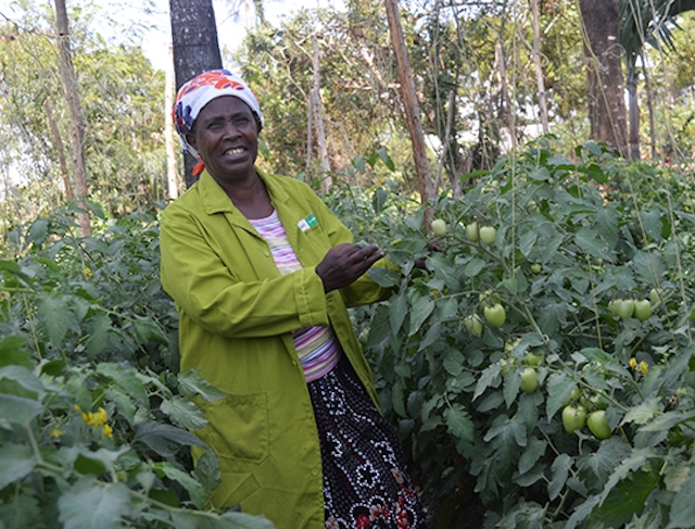 Tabitha Muthoni on her tomato farm in Kenya