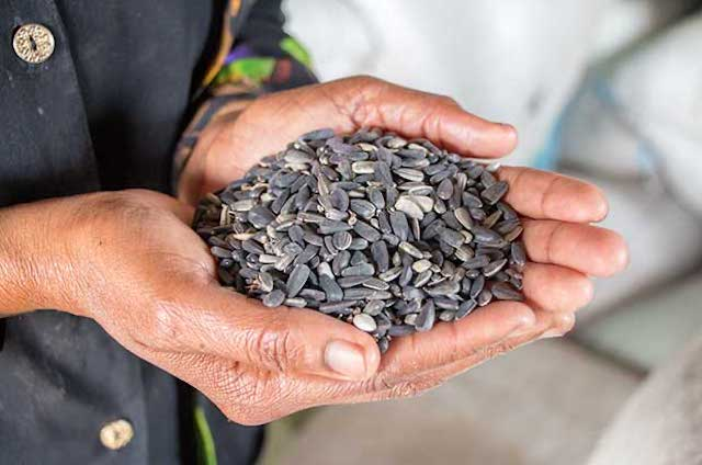 Handful of seeds that display the increase in opportunity that oil has in Africa
