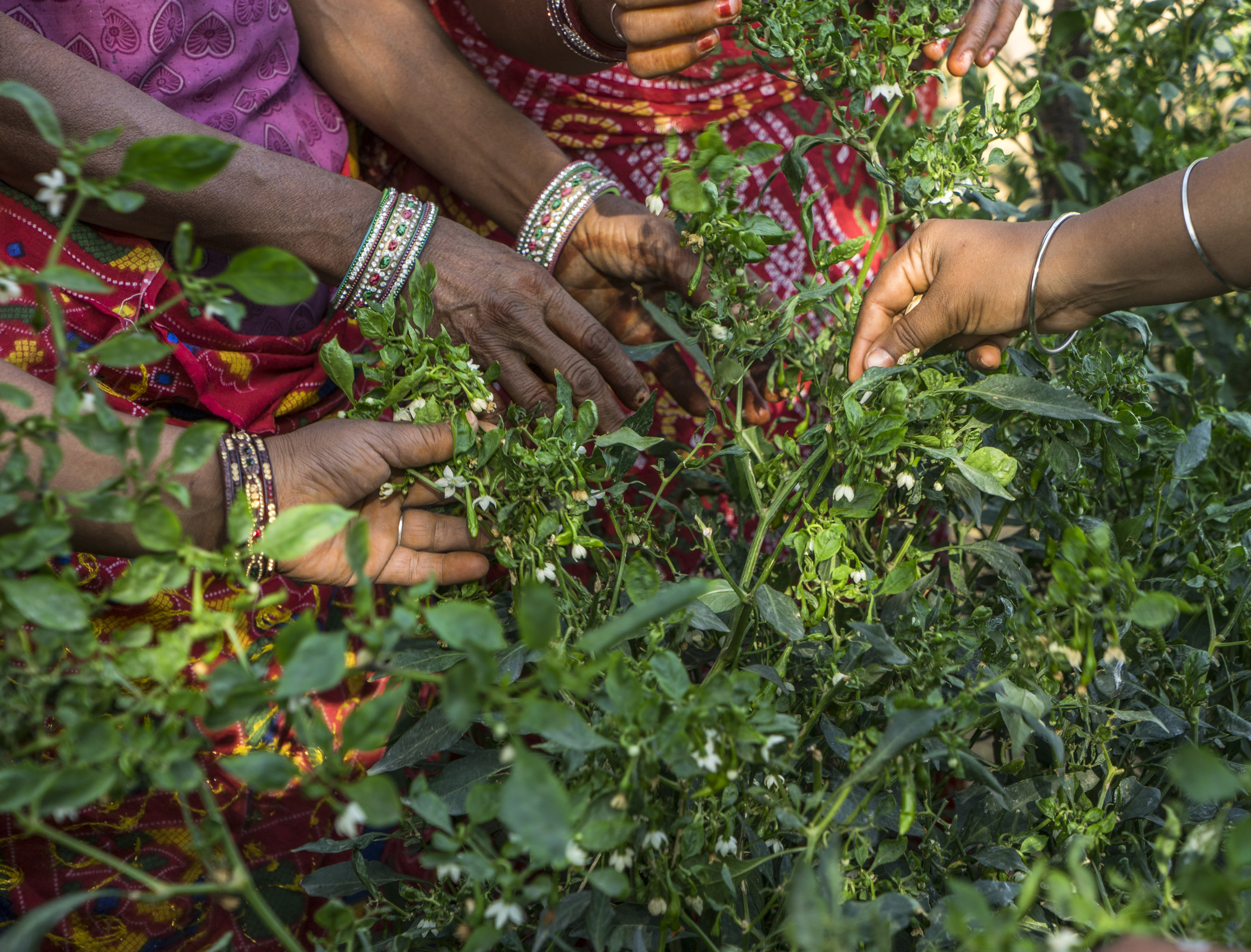 Kitchen Garden In India Women Cultivate Backyard Bounty Technoserve Business Solutions
